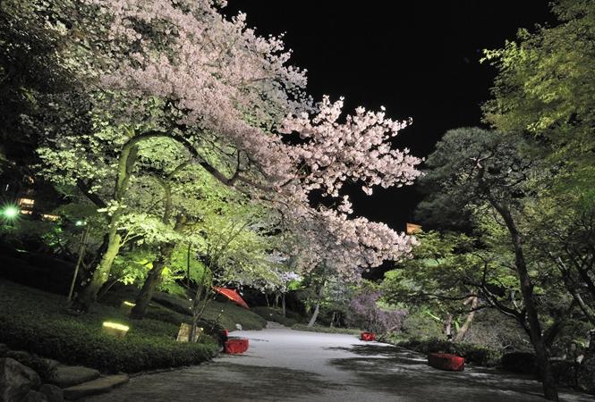 朝から夜のライトアップまで。八芳園で「さくら」を堪能できるイベントが開催