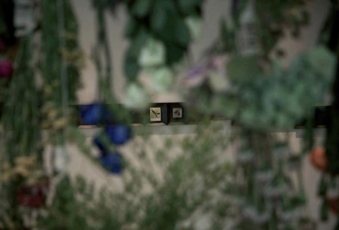 インスタントフィルムと自然環境との密な関係性をめぐる「対比と退比」展が開催中