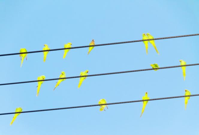 80年代生まれの写真家・水谷吉法による初個展「Colors / Tokyo Parrots」が開催中!