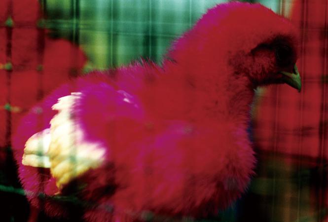 """""""蜷川ワールド""""の奥深さを感じて。写真家・映画監督の蜷川実花による写真展『noir』が開催"""