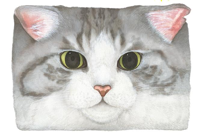 ネコへの果てしない愛が炸裂するポップアップショップがラフォーレ原宿で開催