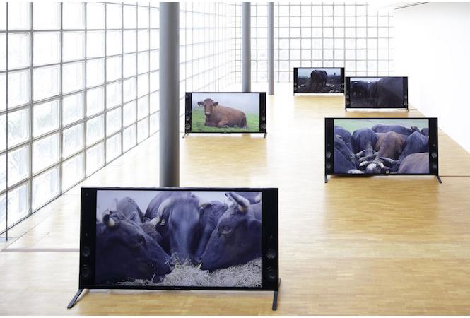 """自分と他者、その """"境界"""" を揺さぶる展覧会。高山明+小泉明郎展、銀座メゾンエルメスにて。"""