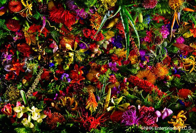 東信氏のフラワーアレンジメントを大迫力の映像で体感! 「Flower Universe -東信 花宇宙の旅-」が上映中
