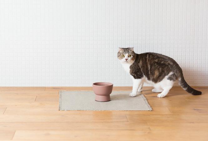 愛猫も大喜びだニャン! 機能性抜群のおしゃれな陶磁器製水飲み器が登場