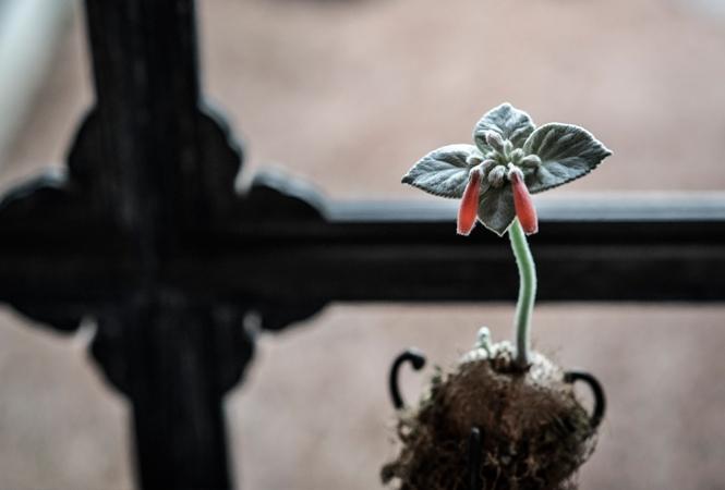 緒方慎一郎×川本諭による新しい草木花の形。八雲茶寮にて企画展「拈華」が開催中