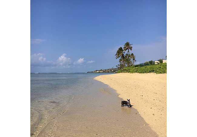 hawai-3