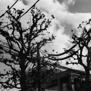 04araki_photocrazyA