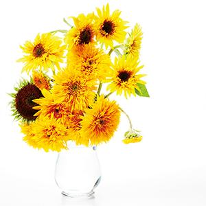 109_Flower_ひまわり_1.indd