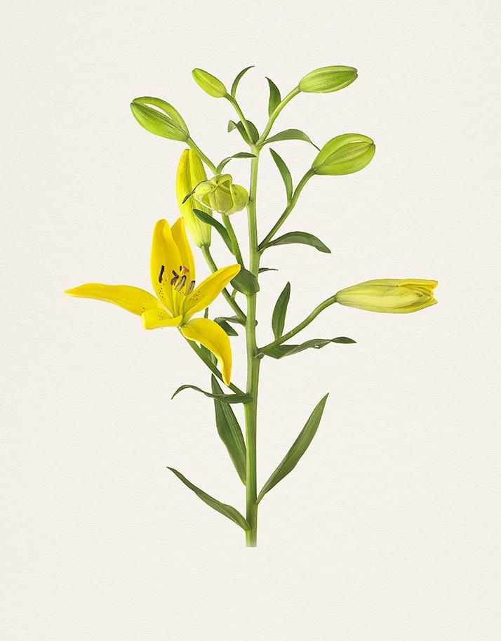 Kenji Toma,The Most Beautiful Flowers