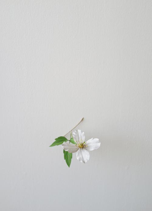 『モンタナ』(2018年) © Suda Yoshihiro Courtesy of Gallery Koyanagi