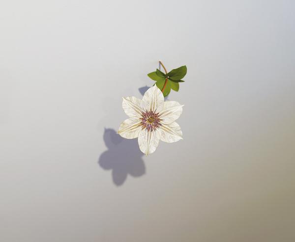 『テッセン』(2012年) © Suda Yoshihiro Courtesy of Gallery Koyanagi