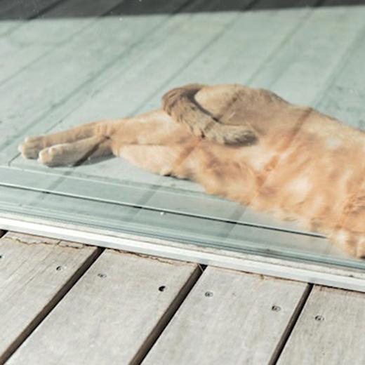 エディター発 モードな事件簿「森での暮らしと猫のこと」