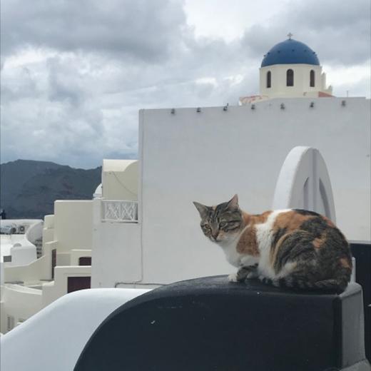 猫だらけ!のサントリーニ島