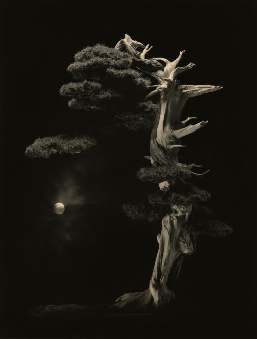 山本昌男 《#4001》 gelatin silver print©YAMAMOTO Masao Courtesy Mizuma Art Gallery