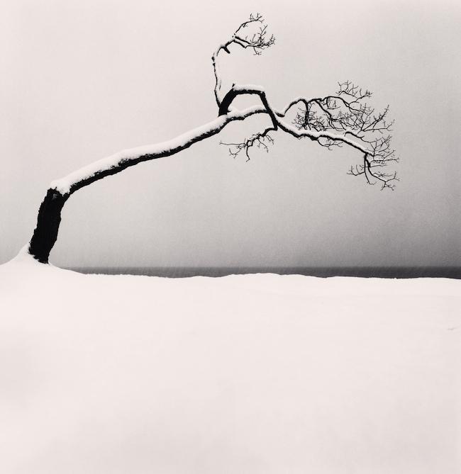 『Kussharo Lake Tree, Study 2, Kotan, Hokkaido, Japan.』 (2005)  © Michael Kenna / RAM