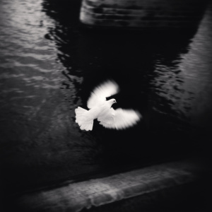 『White Bird Flying, Paris, France.』 (2007)  © Michael Kenna / RAM