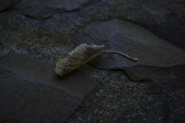 質量への憧憬No.2 葉 Photo by 落合陽一