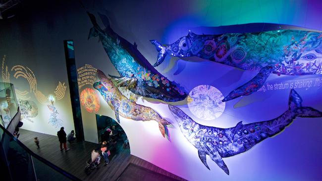 """Aquarium de Paris, Franceでの展示風景 """"鯨の目 / L'oeil de la Baleine"""" photo by Serge Koutchinsky"""