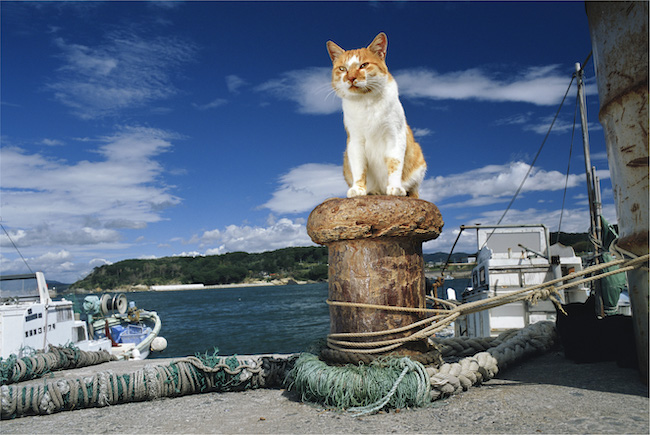 網地島、宮城県石巻市 ©Mitsuaki Iwago