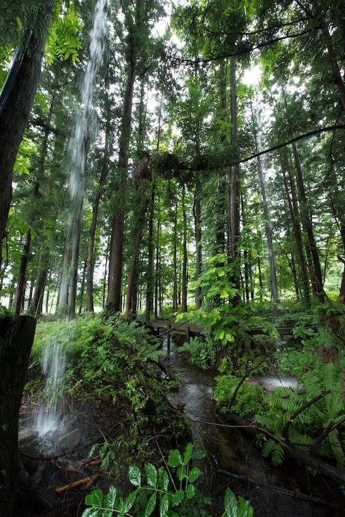 過去作品画像:遠藤利克『Trieb-雨為る 森-』  Photo:Tsuyoshi Hongo