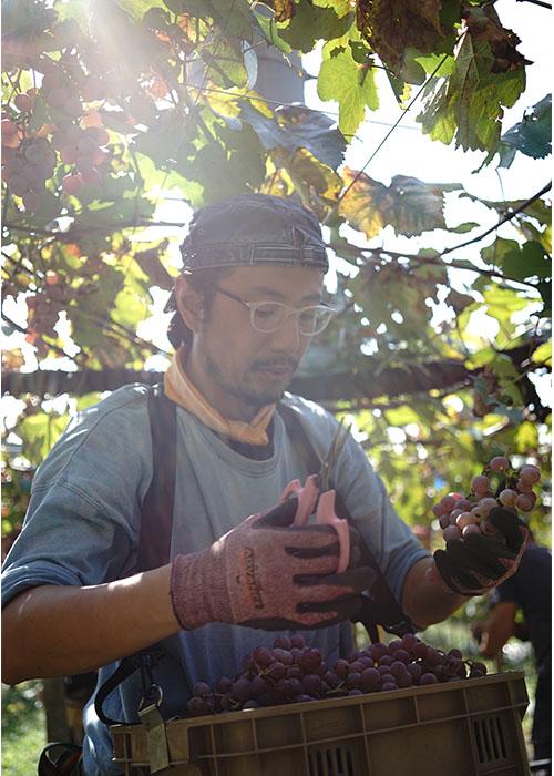 山梨県 甲州ワイン