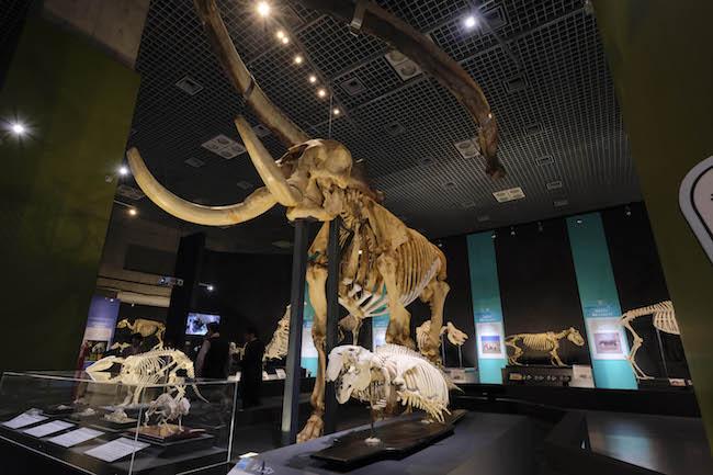 アフリカゾウの全身骨格と天井から吊したシロナガスクジラの下顎