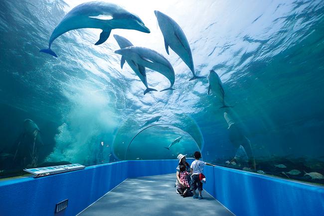 日本最大級のトンネル水槽でイルカやペンギンなどが自由に戯れる様子を見られる。