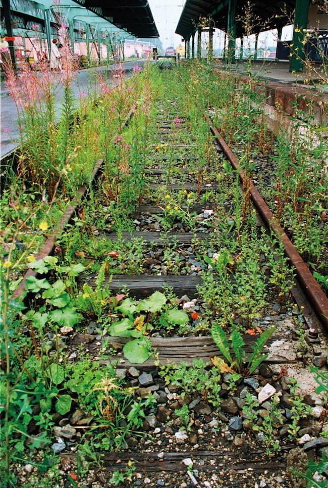 ロイス・ワインバーガー『植物を越えるものは植物と一体である』(1997年)