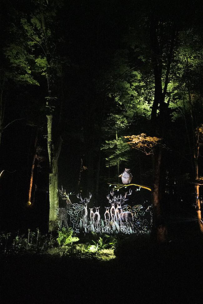 モーメント・ファクトリーが手がけた「阿寒湖の森ナイトウォーク『カムイルミナ』」より、ボッケの森内に投影されたデジタルアート映像。今年7月から11月10日まで開催されている。 Photo: Tomoaki Okuyama (公式サイト)http://www.kamuylumina.jp/