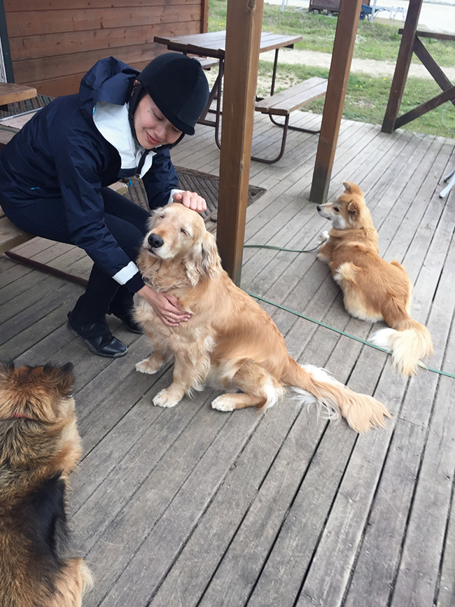 乗馬クラブでは元保護犬や猫たちも仲良く暮らす。