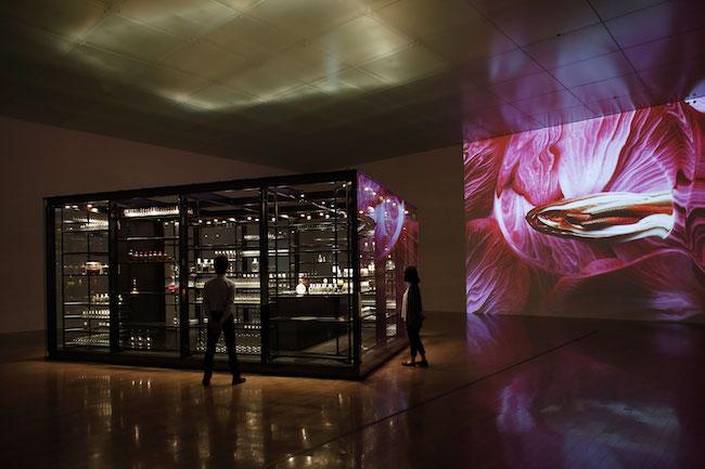 『好奇心をあじわう小部屋』金沢21世紀美術館 photo: Kikou Kiezo
