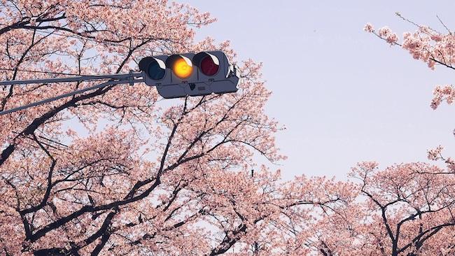 佐藤雅晴『福島尾行』(2018年)個人蔵 ©Courtesy of Estate of Masaharu Sato and KEN NAKAHASHI