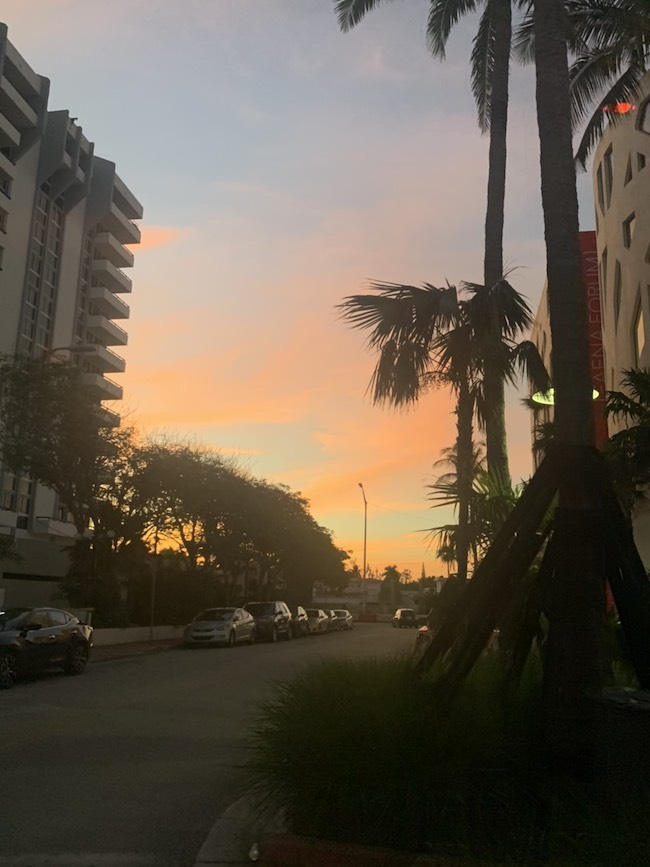 リナさんが撮影した、ヤシの木のシルエットが映えるマイアミならではの夕景。