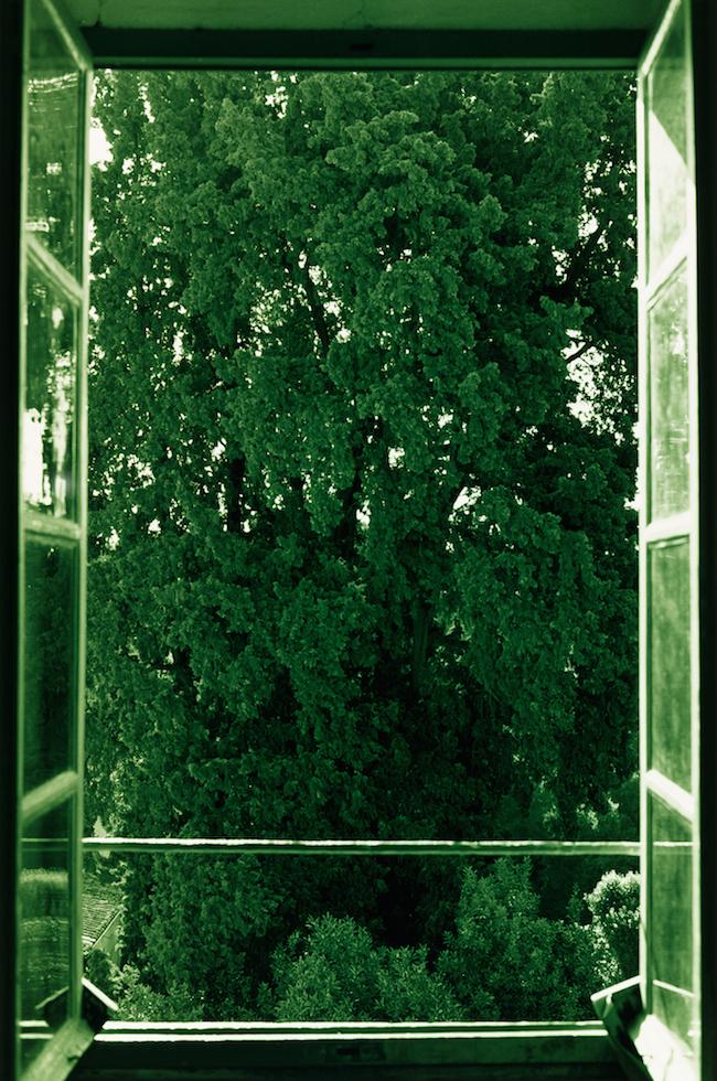 ヴォルフガング・ティルマンス 《tree filling window》 2002年 ワコウ・ワークス・オブ・アート