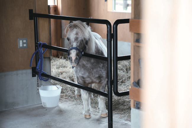 """馬と人間の共生をテーマとした""""馬と共に暮らす家""""にはなんと馬房付き。人間中心のペースから一旦離れたステイを通して、自然本来のリズムに根ざした生き方を知るきっかけに。"""