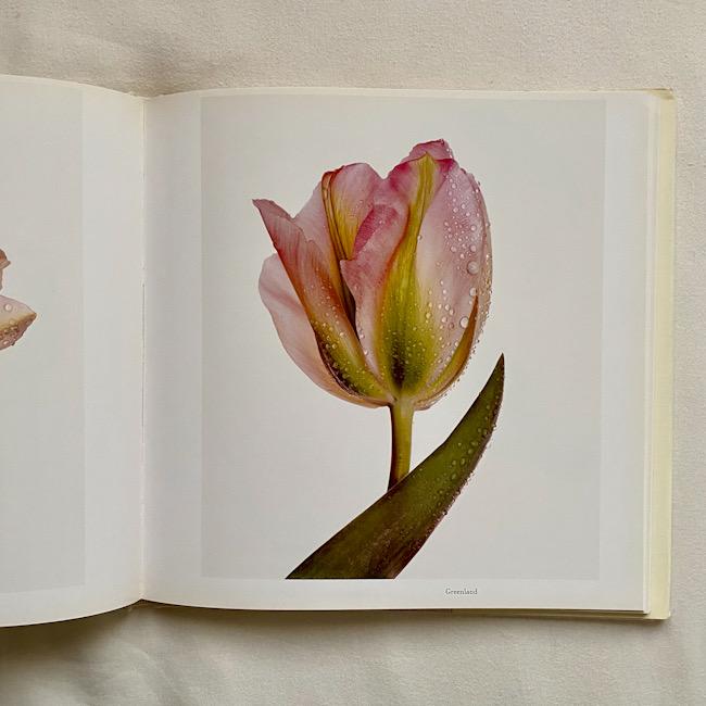 色によって異なりますが、チューリップの花言葉は「思いやり」。