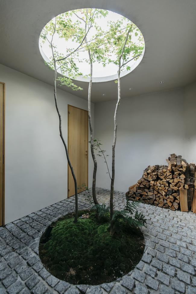 まるで地球を回る月の軌道を思わせる円形の天窓から空に向かって伸びるカエデの木