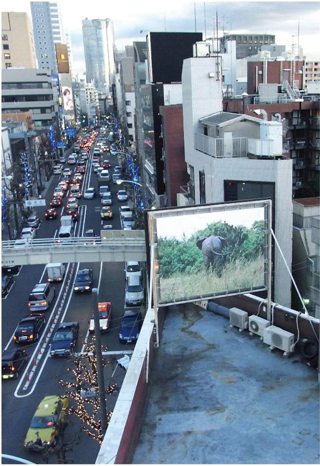 島袋道浩『象のいる星』(2008/2020年)※過去にワタリウム美術館で開催された展示風景より