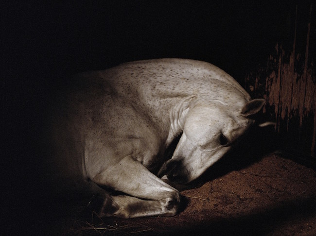 Grace 2012 © Charlotte Dumas, Courtesy of the artist and andriesse eyck gallery, Amsterdam