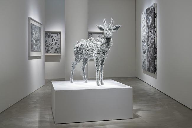 展示風景より。中央の作品は『PixCell-Reed Buck (Aurora)』(2020年)。