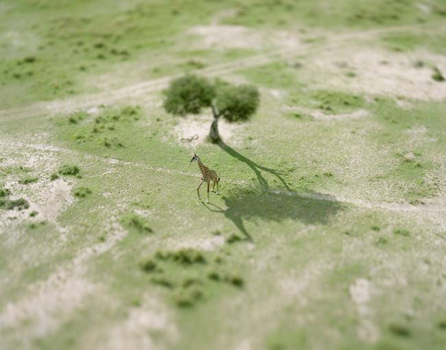 『giraffe』 (kenyaシリーズより) (2008年) © Naoki Honjo