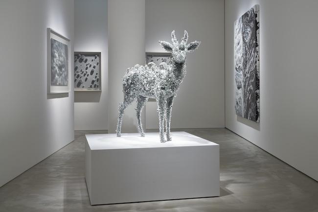 「Oracle」展示風景より。中央の作品は『PixCell-Reed Buck (Aurora)』(2020年)。