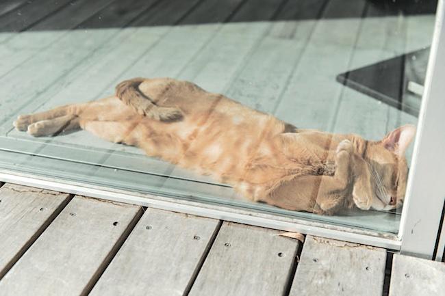 瀬川さんの愛猫、アビシニアンのキキ。洒落たおうちの窓辺で日がな一日くつろぐ。贅沢とは。