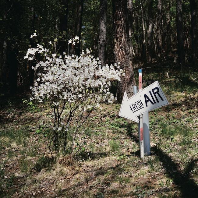 山の中で5月頃に見られたツツジの花。四季の移ろいは都会で過ごしているときよりもダイレクトに肌に感じる