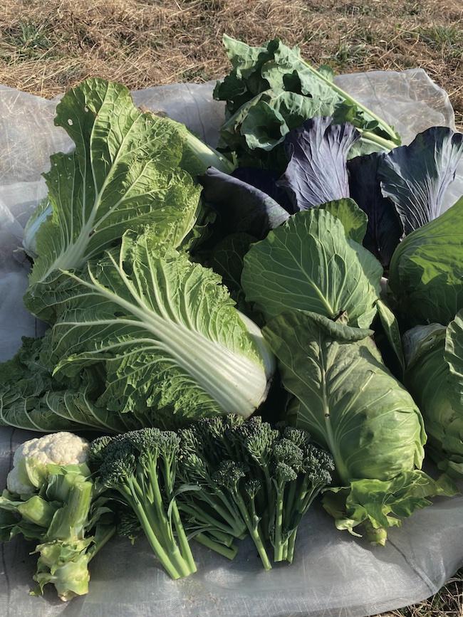 畑で収穫した野菜たちは生き生きとして色も鮮やか。近いうちにベジタブルタンニングにも挑戦してみたいという