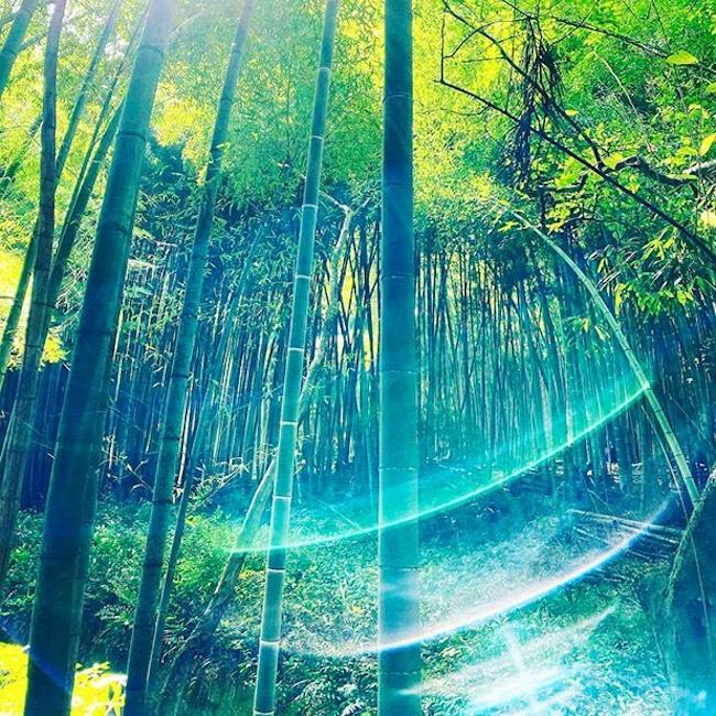 真名井神社は狛犬が龍。狛龍。水の神様で神水が沸いています。京都「真名井の竹林 2」2020 SACRED SPACEより
