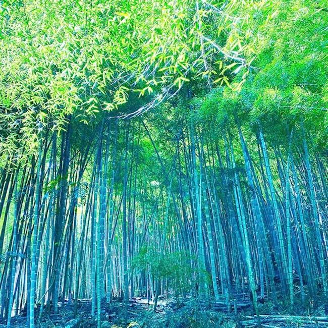 この世が無だった世界に一番はじめに現れた神、天御中主大神(アメノミナカヌシノカミ)が祀られている真名井神社のふもと。京都「真名井の竹林 1」2020 SACRED SPACEより
