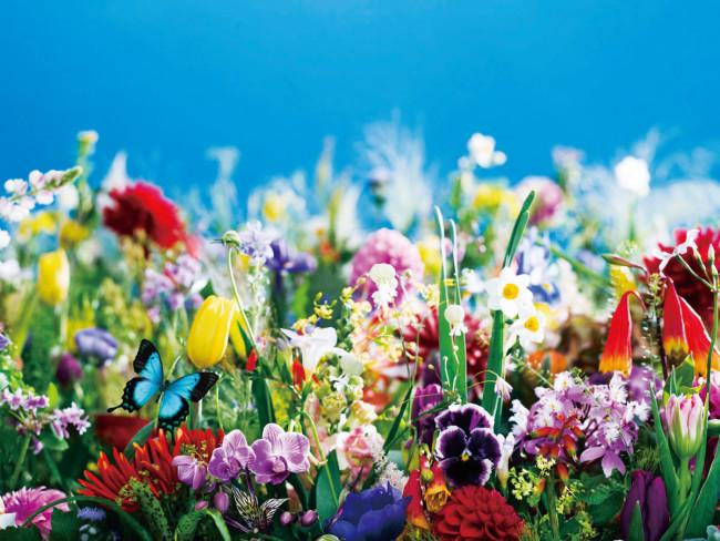 『earthly flowers, heavenly colors』(2017年) ©mika ninagawa, courtesy of Tomio Koyama Gallery