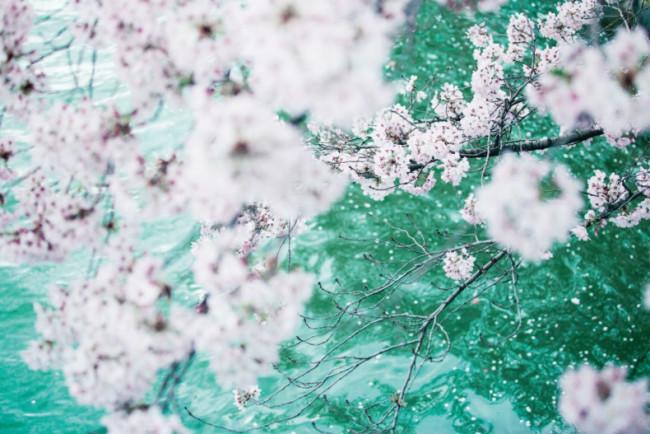 『Untitled』 ©mika ninagawa, courtesy of Tomio Koyama Gallery