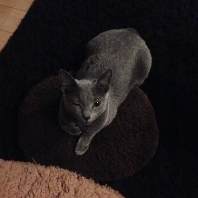 ウィンクが上手な猫、ベジータ♥の画像